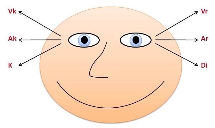 Augenbewegungsmuster